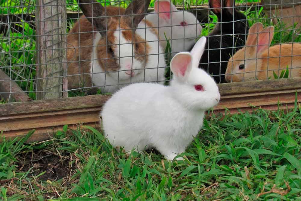 comprar-jaulas-conejos