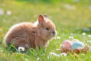 jaulas-para-conejos-baratas