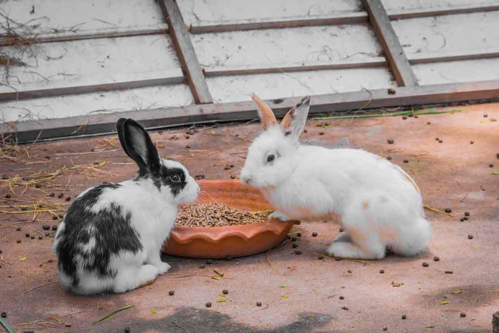 jaulas-para-conejos-enanos
