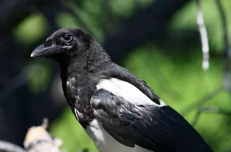 Los 10 Pájaros Que Mejor Cantan Del Mundo Vaya Aves