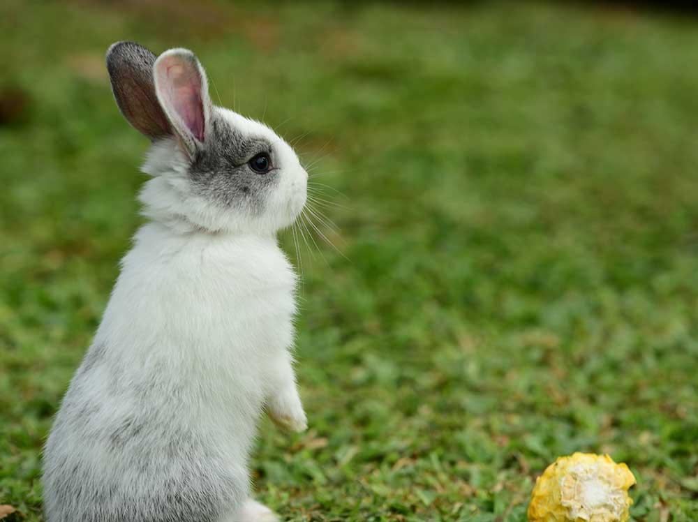 conejo-mini-cuidados-toy