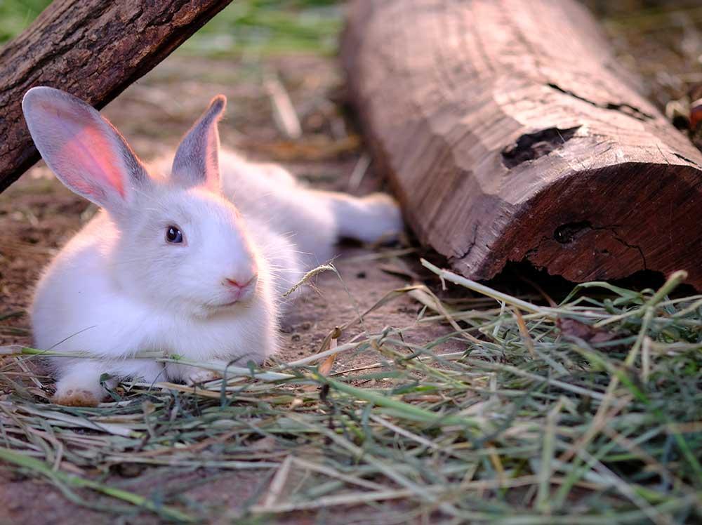 cuidado-conejo-toy