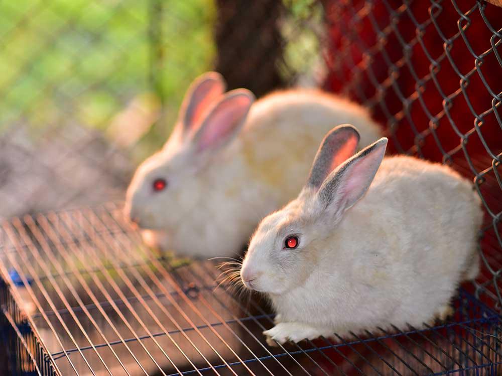 cuidados-conejos-toy